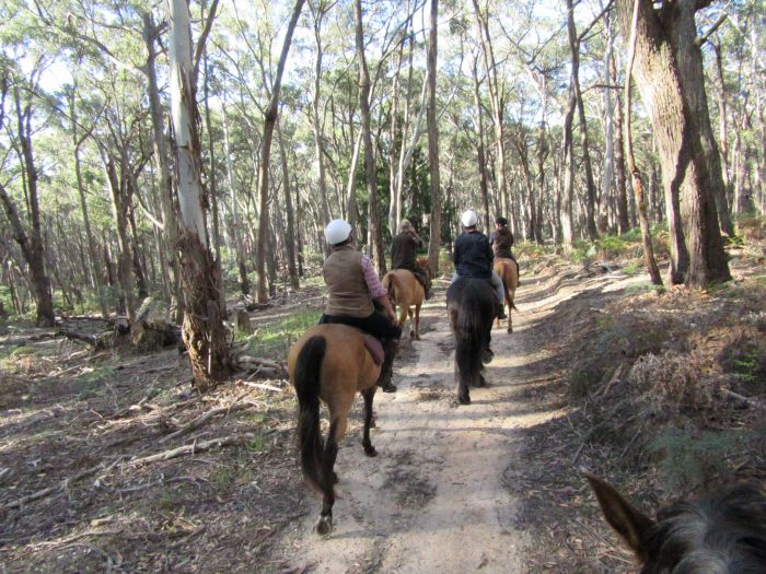 Silver Brumby Trails - VIC Tourism