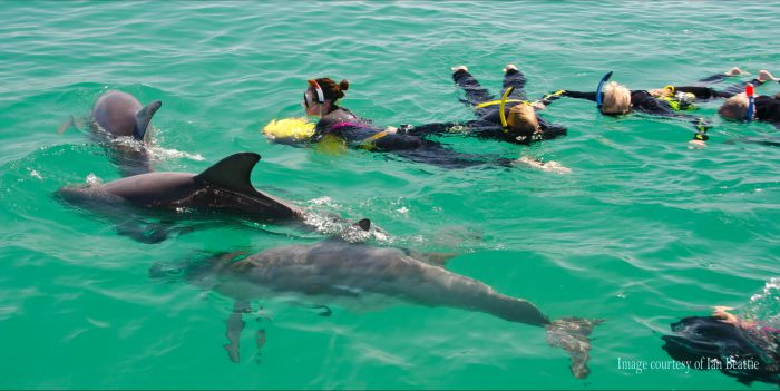 Rockingham Wild Encounters - Swim with Wild Dolphins - VIC Tourism