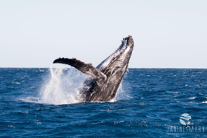 2.5 hour Wildlife and Snorkel tours on the Ningaloo Reef, Exmouth