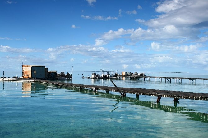 Full Day Guided Abrolhos Fly and Flipper Tour from Geraldton
