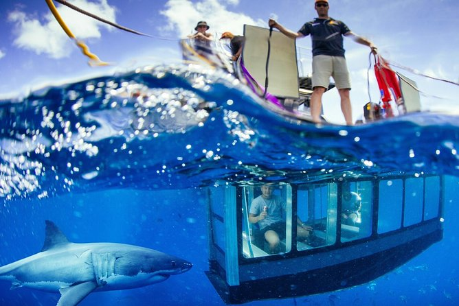 White Shark Tour with Optional Cage Dive from Port Lincoln - VIC Tourism