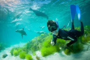 Half-Day Sea Lion Snorkeling Tour from Port Lincoln - VIC Tourism