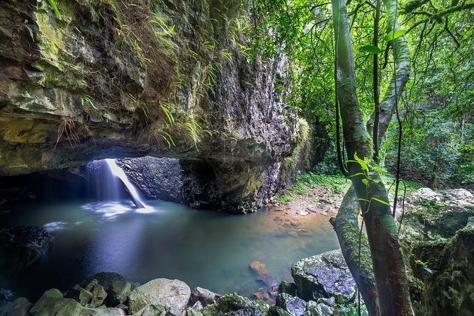 Springbrook and Tamborine Rainforest Tour Including Natural Bridge and Glow Worm Cave - VIC Tourism