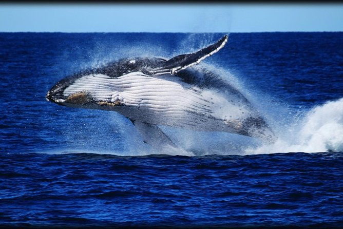 Whale Watching Cruise from Redcliffe Brisbane or the Sunshine Coast - VIC Tourism