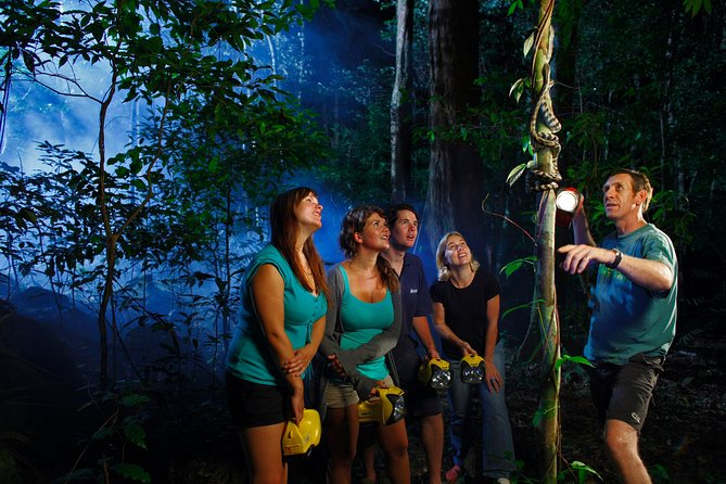 Daintree Rainforest Night Walk from Cape Tribulation - VIC Tourism