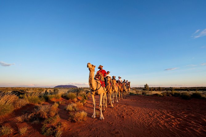 Uluru Camel Express Sunrise or Sunset Tours - VIC Tourism
