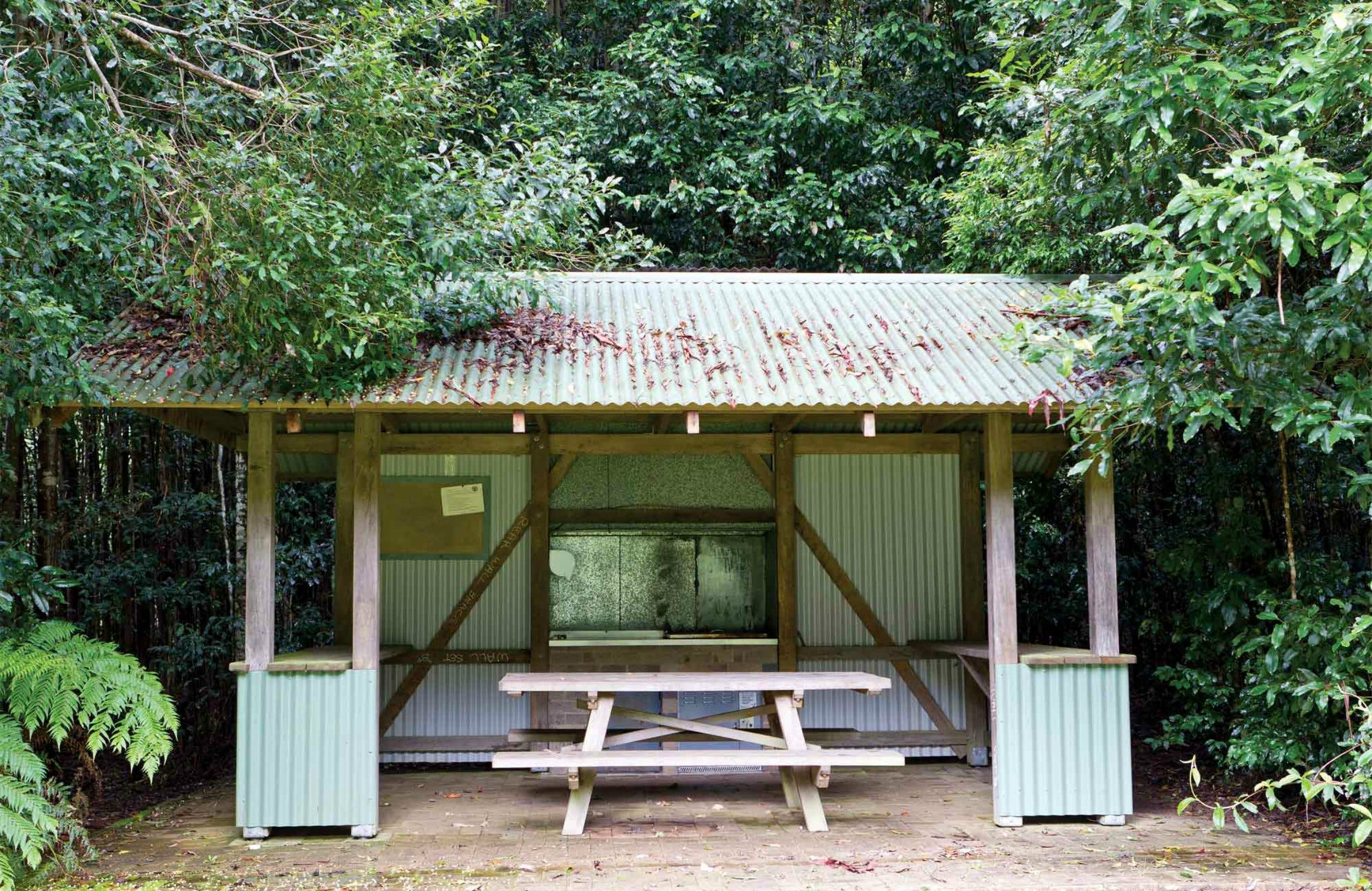 Coachwood Picnic Area - VIC Tourism