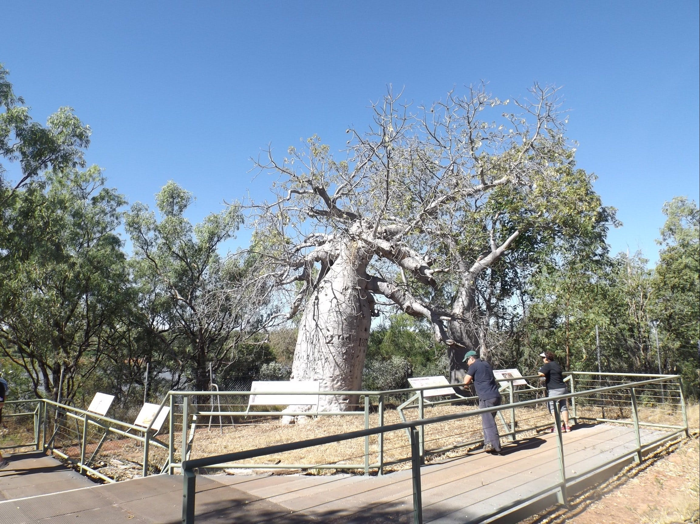 Gregory's Tree Timber Creek - VIC Tourism