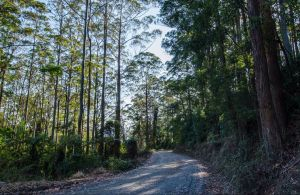 Hastings Forest Way Touring Route - VIC Tourism