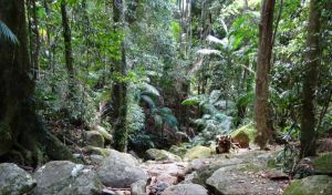 Lyrebird track - VIC Tourism