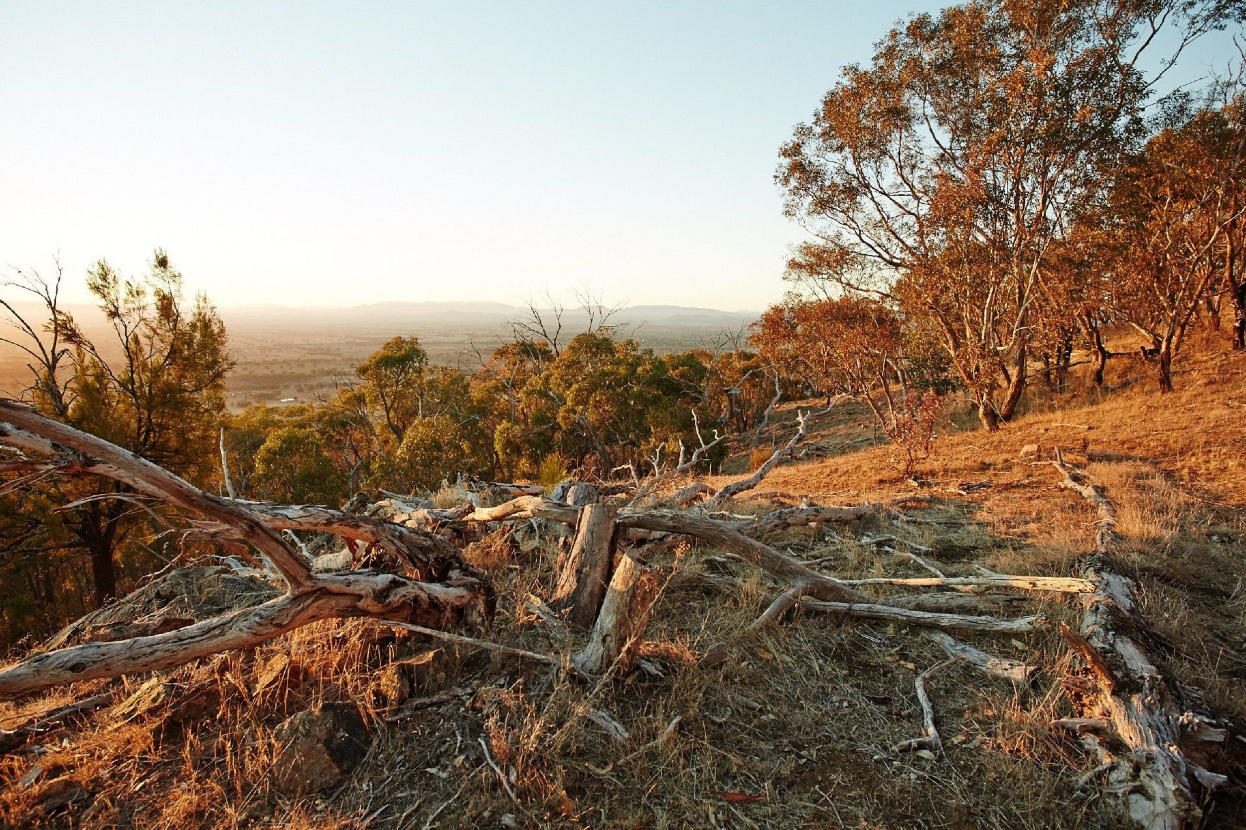 Chick Hill Walk - VIC Tourism