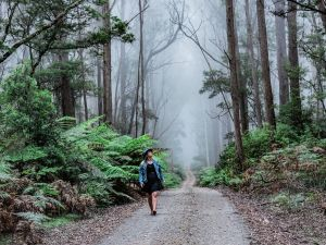 The Corn Trail Walking Track - VIC Tourism