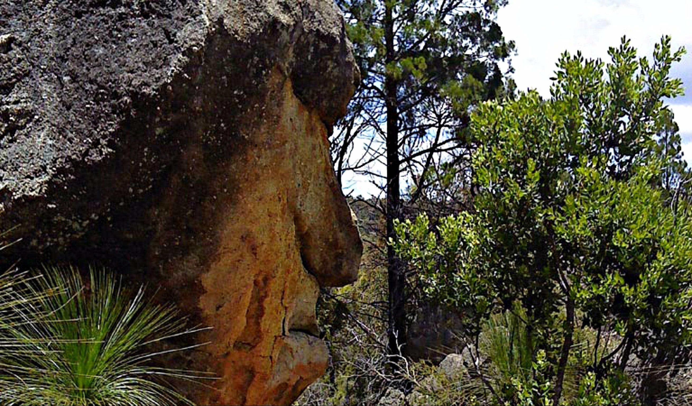 Mystery Face Walking Track - VIC Tourism