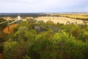 Archer Drive Scenic Drive and Lookout - VIC Tourism