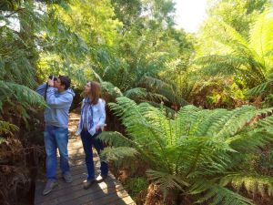 Endeavour Fern Gully Walks - VIC Tourism