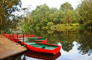 Lane Cove National Park - VIC Tourism