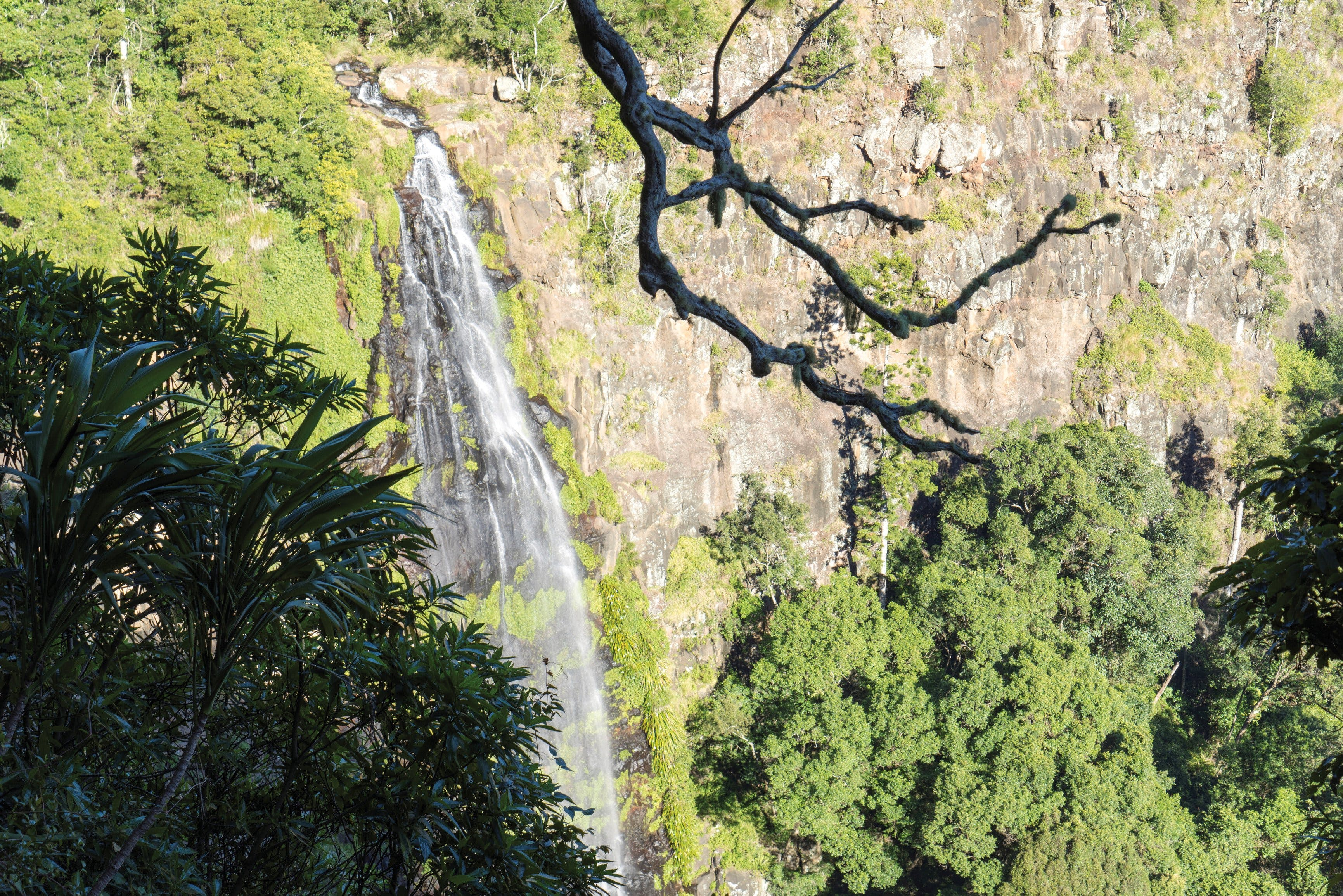 Morans Falls track Lamington National Park - VIC Tourism