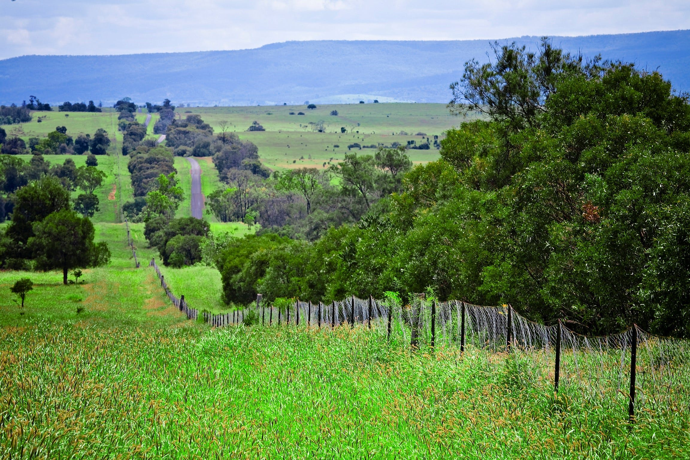 Wild Dog Barrier Fence - VIC Tourism