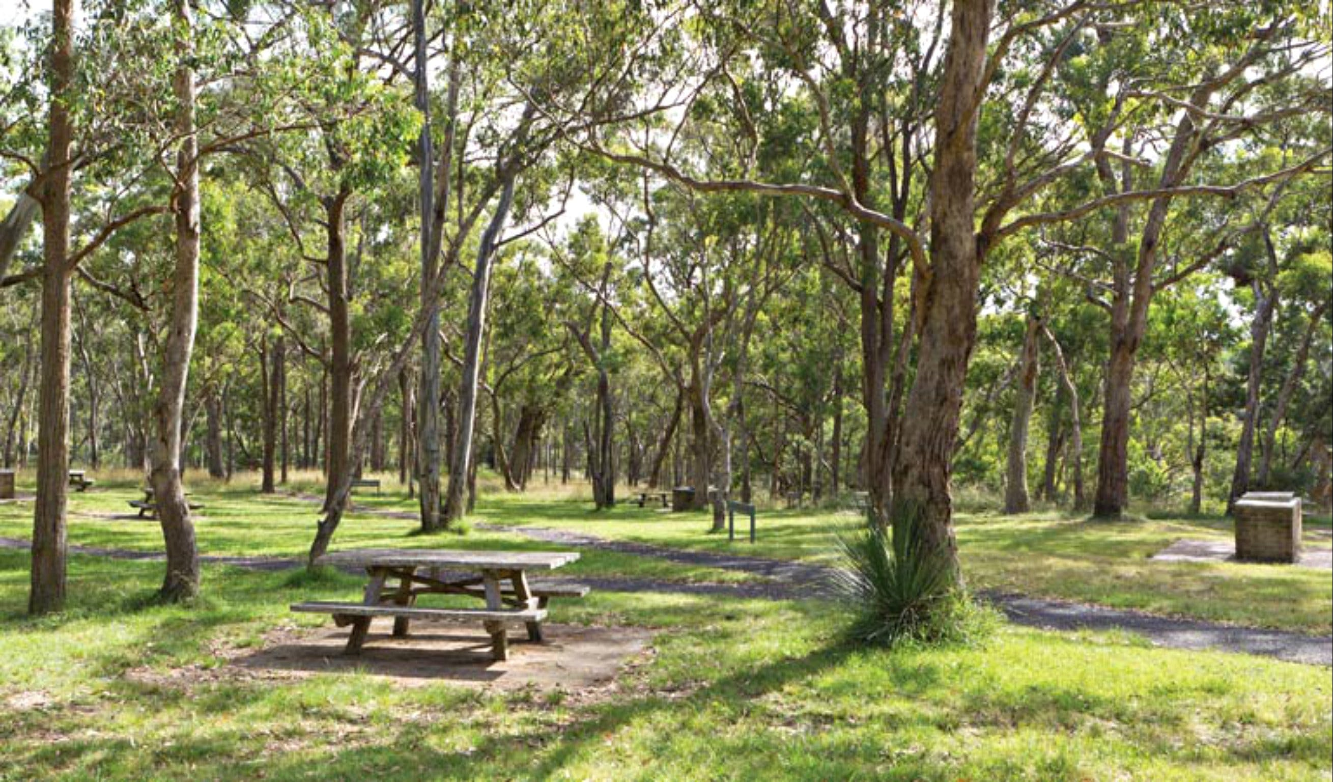 Wollomombi Gorge and Falls Picnic Area - VIC Tourism