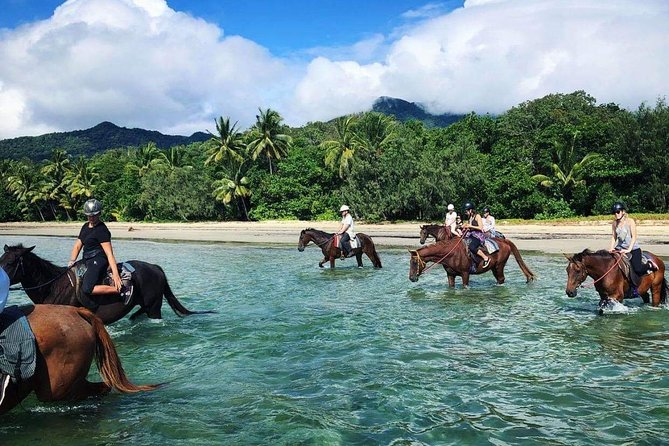 Afternoon Beach Horse Ride in Cape Tribulation - VIC Tourism
