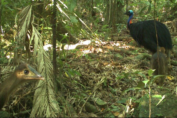 Small-Group Trekking Experience in Daintree National Park - VIC Tourism