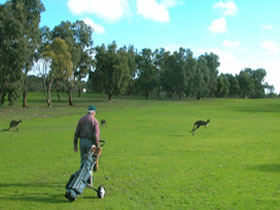 Coffin Bay Golf Club - VIC Tourism