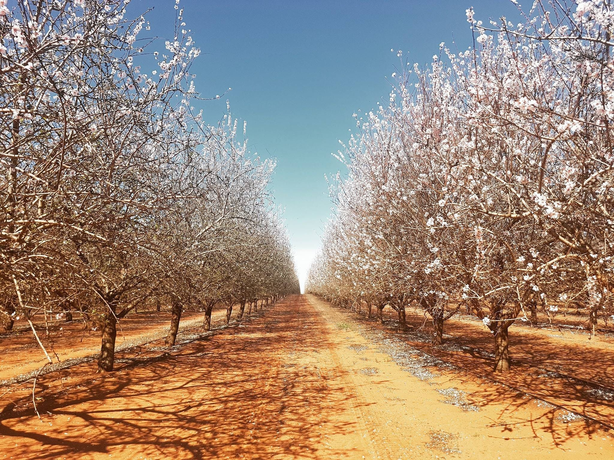 Mallee Almond Blossom Festival - VIC Tourism
