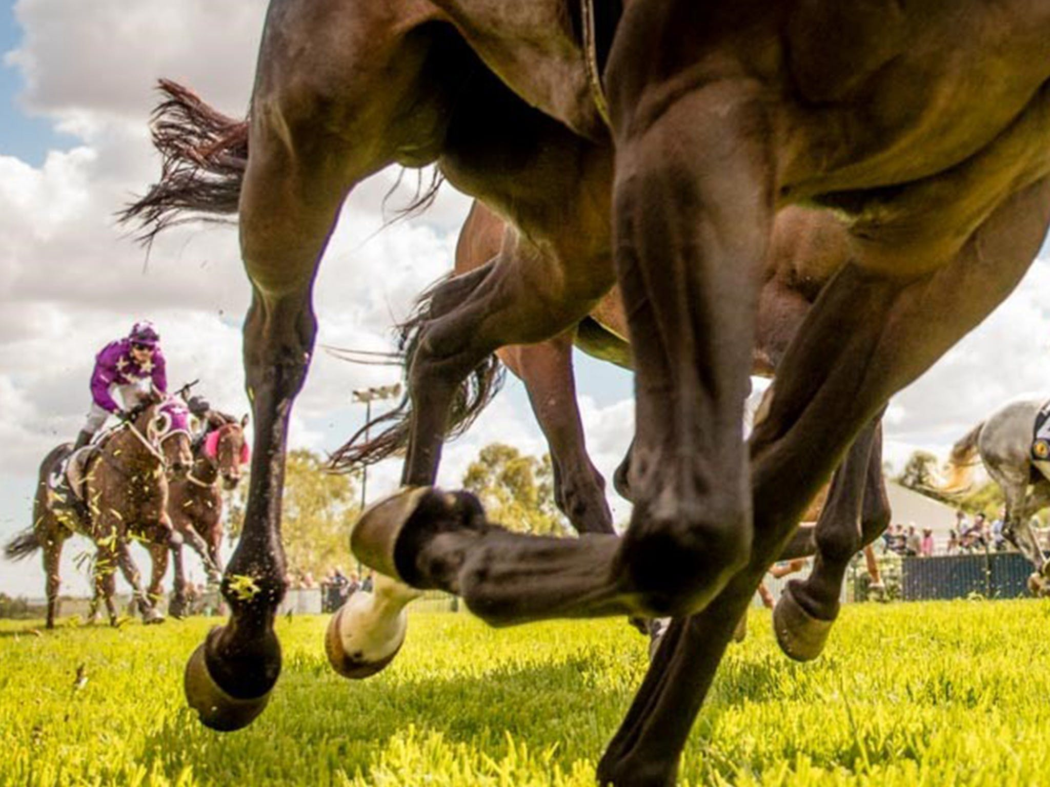 Night Markets and Race Day - VIC Tourism