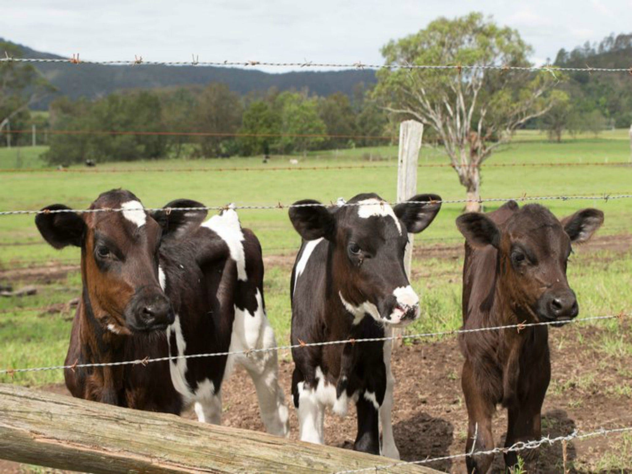 Bandon Grove Farm Tours - VIC Tourism