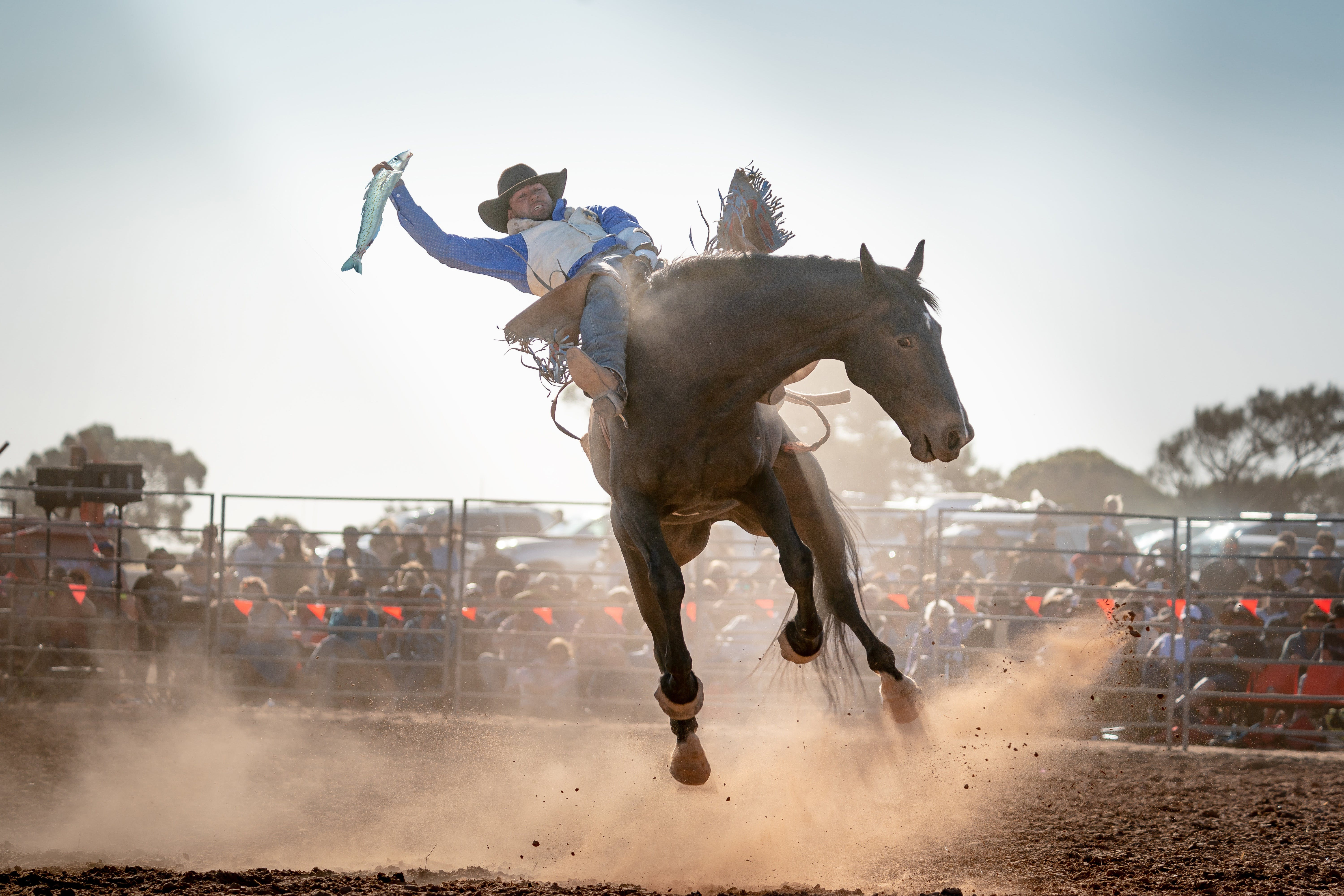Rodeo by the Sea - Streaky Bay - VIC Tourism