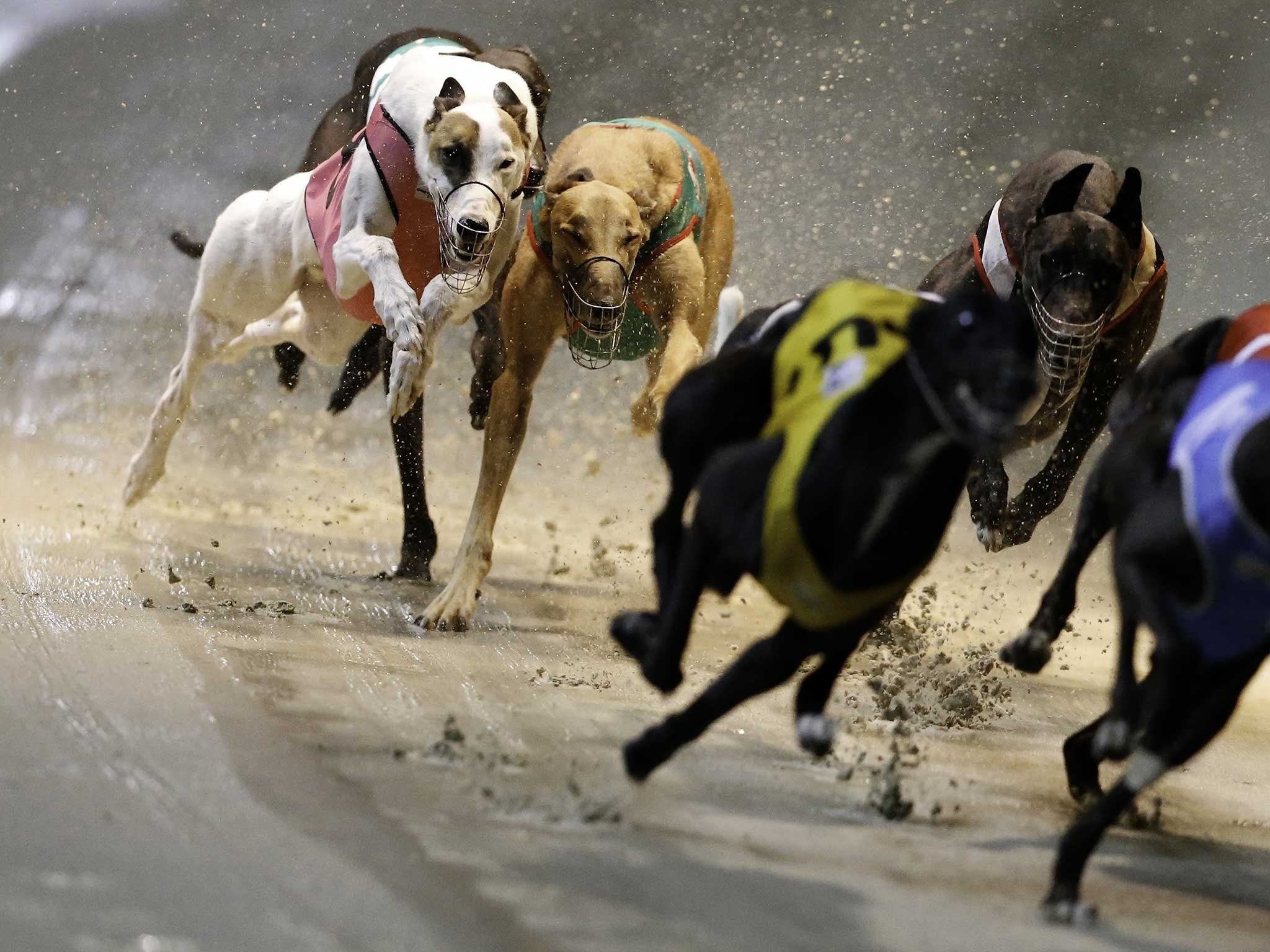 Twilight Greyhound Racing - VIC Tourism