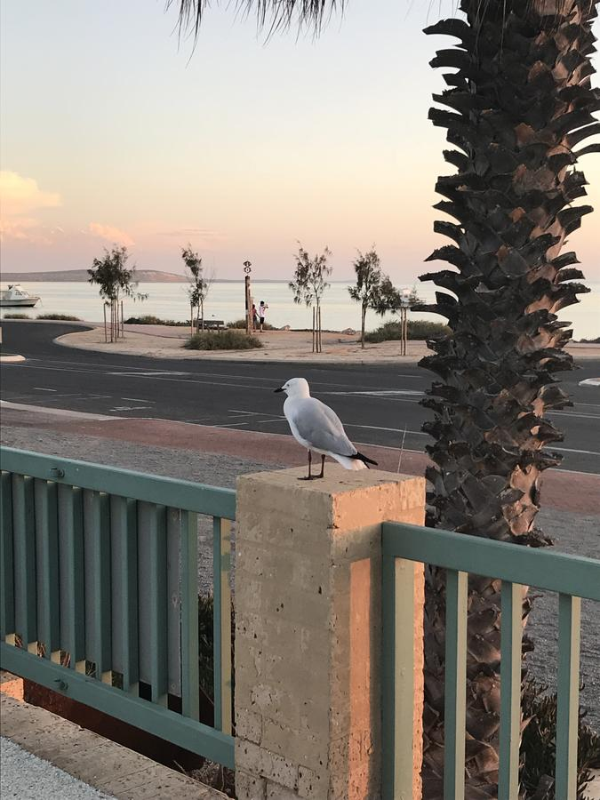 Shark Bay Seafront Apartments - VIC Tourism